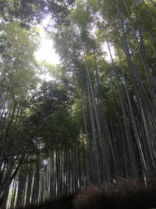 Bamboo Groves in Arashiyama #2